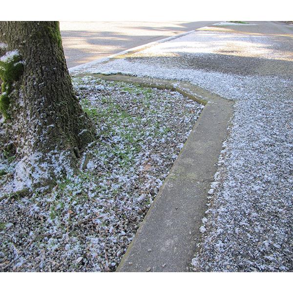 今季の雪。