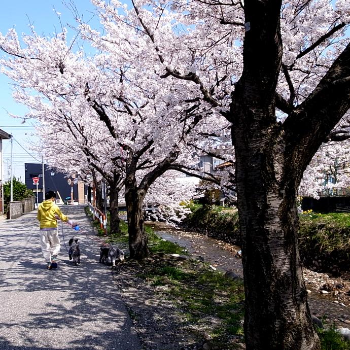 花見と散歩